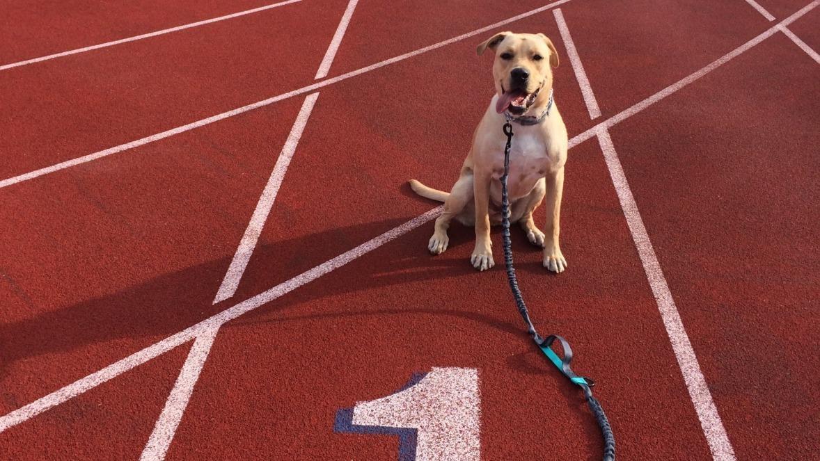 Hansen's faithful running companion, Murphy.